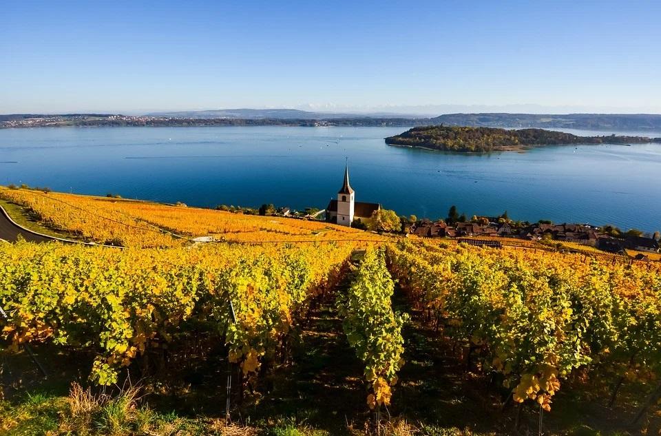 Le vin a en parti causé le déclin de l'hydromel.